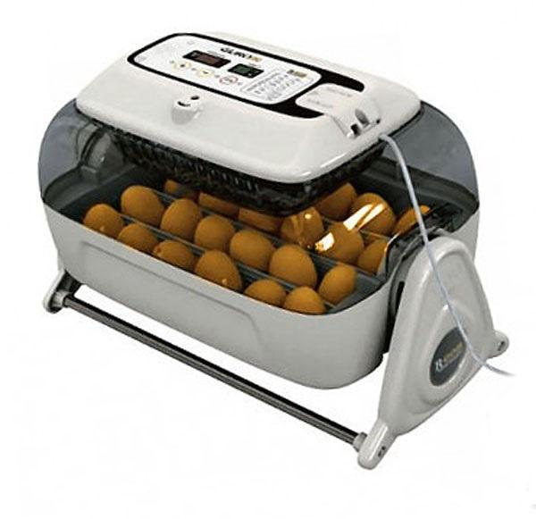 Куриные яйца в инкубаторе со специальным гигрометром.